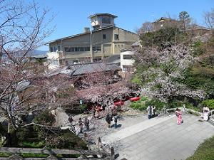 茶わん坂の桜