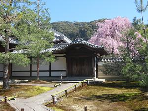 唐門と枝垂れ桜