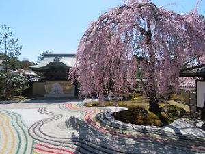 枝垂れ桜と勅使門