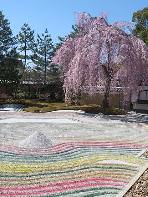 虹色の砂と枝垂れ桜
