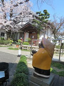 タヌキと桜