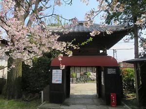 桜と龍宮門