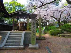 神功皇后御旗塚と桜