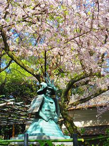 神鎧像と桜