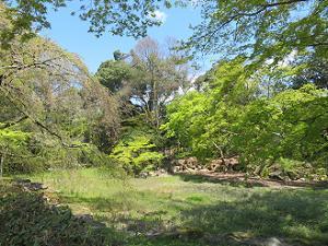 近衛邸跡の新緑