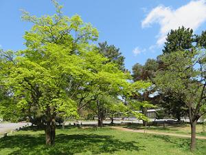 新緑と芝生