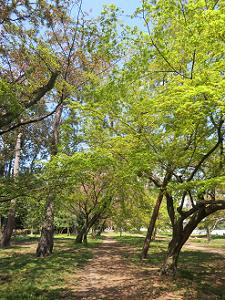 木々の間を歩く