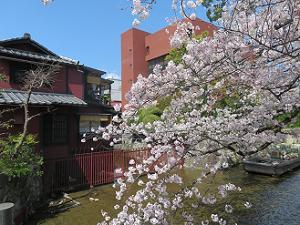 一之船入の桜