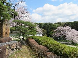 城門近くから眺める桜