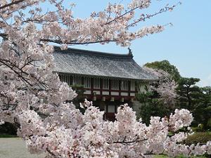 桜越しに見る城門