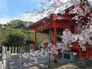 山城ゑびす神社と桜