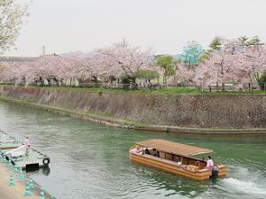 十石舟と動物園の桜