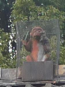 拝殿の屋根の上の猿