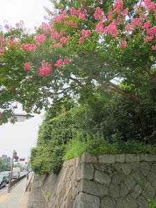 サルスベリと石垣