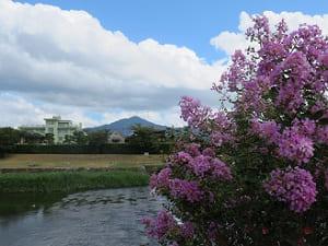 サルスベリと比叡山