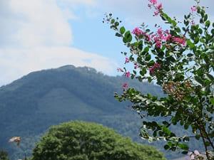 サルスベリと大文字山