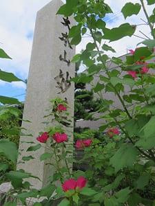 石柱とフヨウ