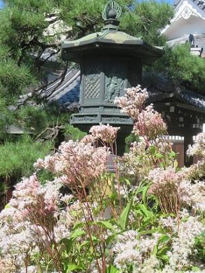 灯籠とフジバカマ