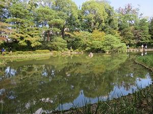 中神苑の緑