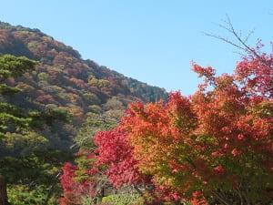紅葉と嵐山