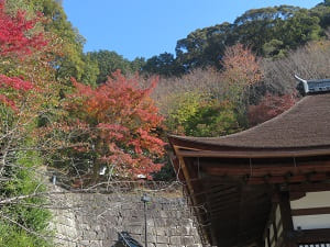 釈迦堂の屋根と紅葉