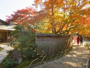 青嶂軒付近の紅葉