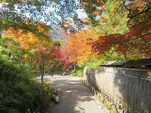 宝厳院垣と紅葉
