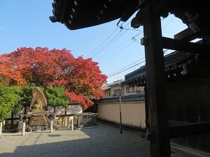 山門近くから見る紅葉