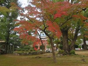 しんみりとした紅葉