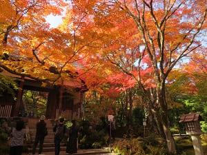 仁王門と紅葉