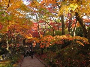 見下ろす紅葉と仁王門