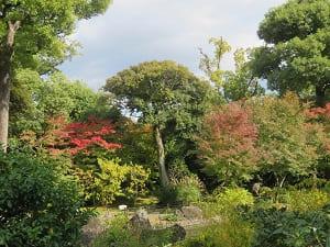 紅葉し始めた平安の庭