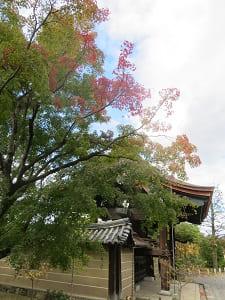 唐門と紅葉