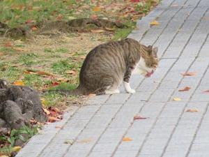 くつろぐネコ