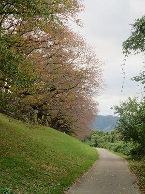 北側の遊歩道