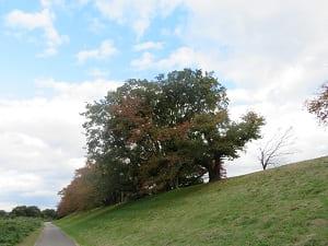 桜並木と空