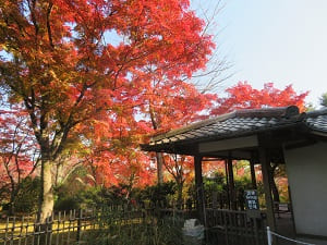 出口付近の紅葉