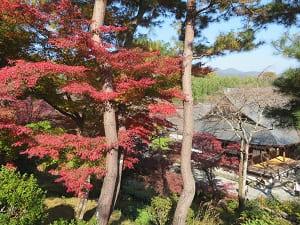 望京の丘から見下ろす紅葉