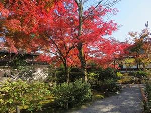 百花苑の紅葉