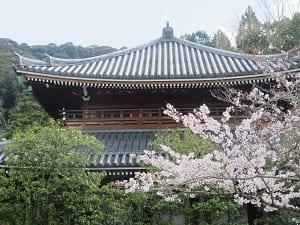 寶佛殿と桜