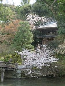 納骨堂と桜