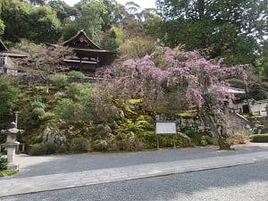 御廟と紅枝垂れ桜