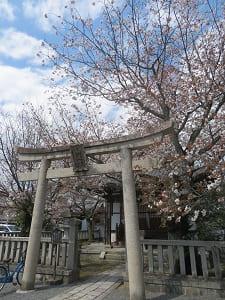 妙見宮と山桜