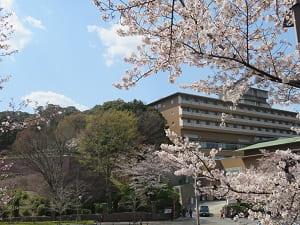 桜とウェスティン都ホテル京都