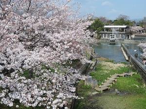 桜と琵琶湖疏水