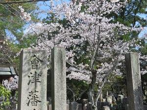会津墓地の桜