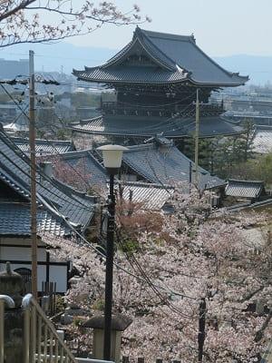 三重塔から眺める桜