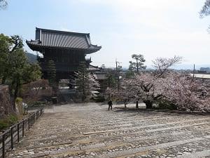 見下ろす山門と桜