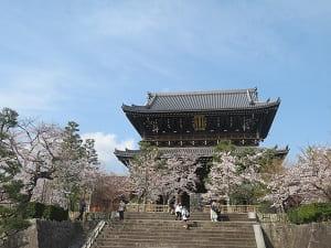 見上げる山門と桜