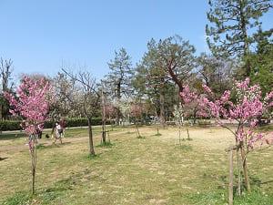 青空と桃林